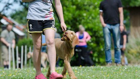 Elektrické obojky pre výcvik psov odporúčajú aj skúsení kynológovia